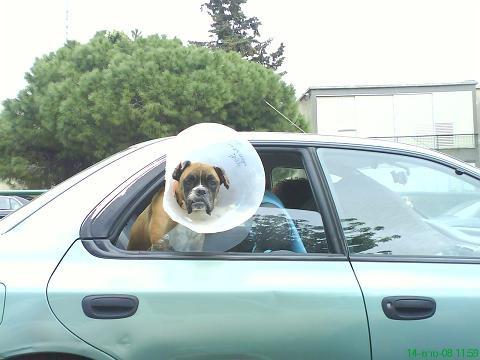 lamp-dog