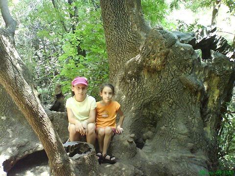 העץ של פו - שמורת תל דן